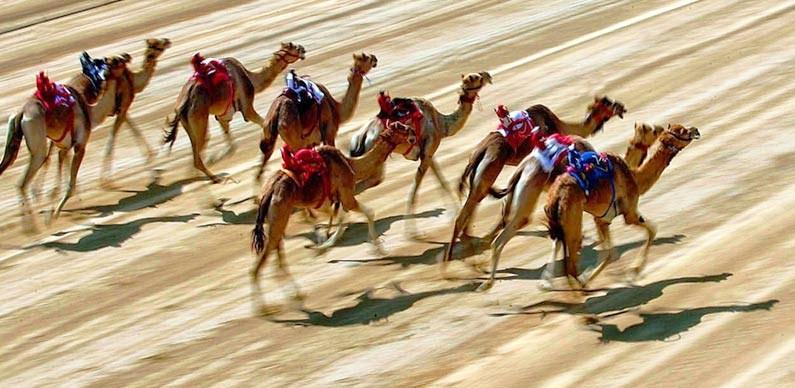 Camel Lids Banner 2